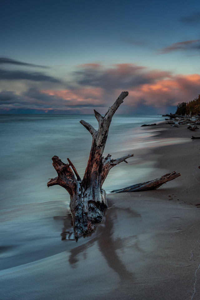A large piece of driftwood anchors itself on the beach at Great Slave Lake, Northwest Territories